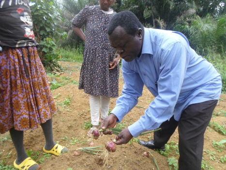 Cameroun : La culture des oignons réussit dans la zone forestière du Sud | Questions de développement ... | Scoop.it