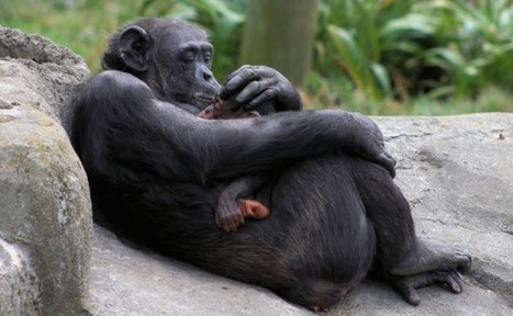 10 Amazing Displays Of Animal Empathy | Empathy and Animals | Scoop.it