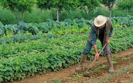 Cultiver son jardin pourrait devenir un acte criminel | SOUVERAINETÉ ALIMENTAIRE PARTOUT | Scoop.it