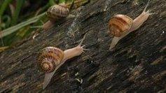 Bourgogne : Tués par les pesticides, les escargots de Bourgogne sont devenus des escargots de Pologne | Pesticides et biocides | Scoop.it