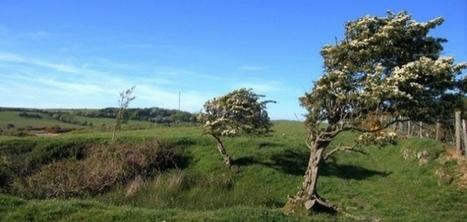 Météo : des vents de plus de 100km/h en Basse-Normandie   La Manche Libre   Actu Basse-Normandie (La Manche Libre)   Scoop.it