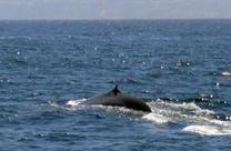 Le Gabon se pose en défenseur africain des baleines - Magazine GoodPlanet Info | Information sur les océans | Scoop.it