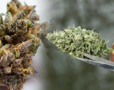 G Pen Elite Dry Herb Vaporizer by Grenco Scienc