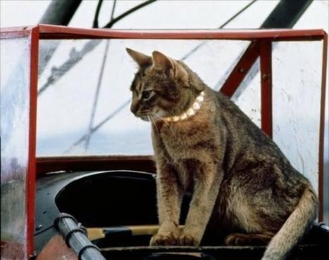 Un chercheur en sécurité utilise son chat pour trouver les réseaux Wi-Fi peu protégés | Dangers du Web | Scoop.it