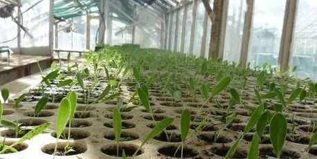 Dans un ancien bassin minier du Gard, des plantes dévoreuses de ... - Le Monde | jardins et développement durable | Scoop.it