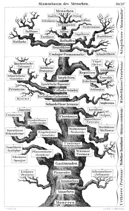 Trees of Life: A Visual History of Evolution | omnia mea mecum fero | Scoop.it