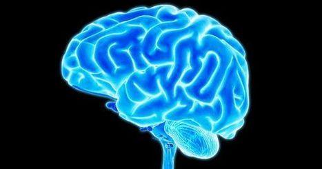 Coding the Brain: Scientists Move Closer to Unlocking the Key to Long-Term Memories | Estudios de futuro | Scoop.it