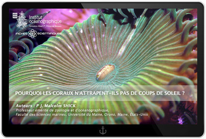 Pourquoi les coraux n'attrapent-ils pas de coups de soleil ? - Institut océanographique - Fondation Albert Ier, Prince de Monaco | Information sur les océans | Scoop.it