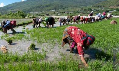 Bhutan set to plough lone furrow as world's first wholly organic country | Geog-on Golland | Scoop.it
