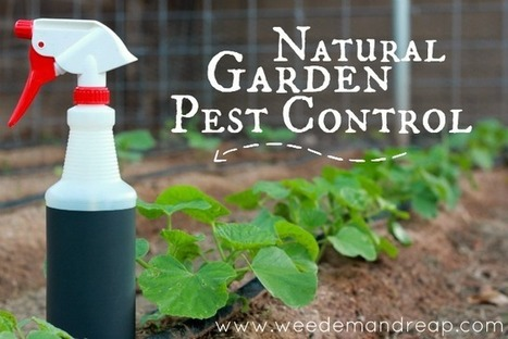 My Natural Garden Pest Control - Weed'em & Reap | Sustain Our Earth | Scoop.it
