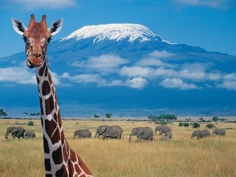 Giraffes Spend Their Nights Quietly, Constantly Humming | Semiotic Adventures with Genetic Algorithms | Scoop.it