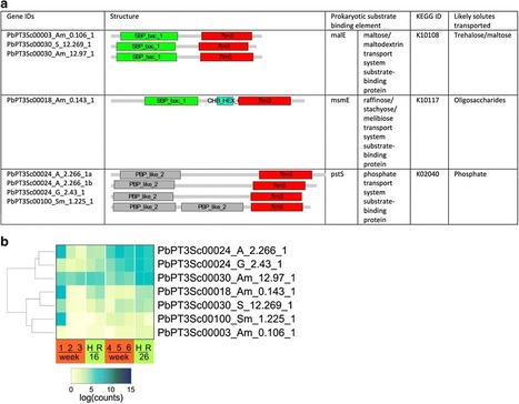 BMC Genomics:The compact genome of the plant pathogen Plasmodiophora brassicae is adapted to intracellular interactions with host Brassica spp (2016) | Plant Pathogenomics | Scoop.it