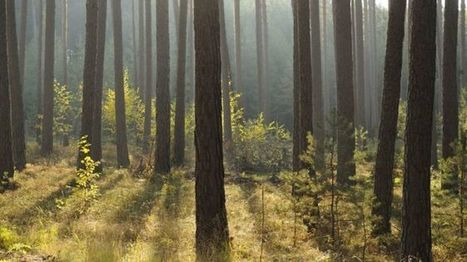 Increased funding for woodland creation in Scotland - BBC News | Sustainable Tourism | Scoop.it