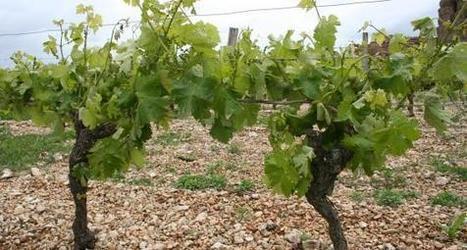 L'utilisation de la biodynamie dans les domaines viticoles de Bourgogne - Viti-net.com | Vins & Plaisirs | Scoop.it