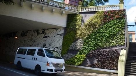 Jardines verticales mejoran la calidad del aire - Periódico y Agencia de Noticias Imagen del Golfo   ideas verdes   Scoop.it