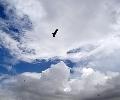 EU-plan vereenvoudigt de cloud - ZDNet.nl   digibieb   Scoop.it