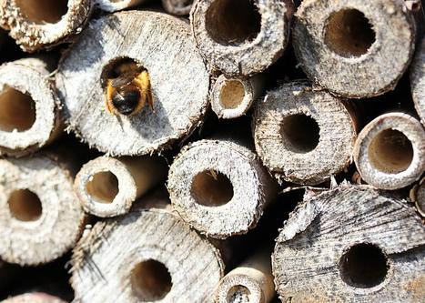 El Blog de La Tabla: Hoteles para insectos | Bichos en Clase | Scoop.it