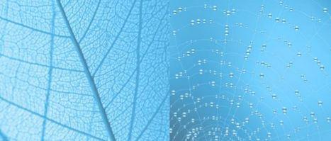 [Intelligence collective] Processus d'efficacité cognitive   Formation, Management & Outils Technologiques support de l'intelligence collective   Scoop.it