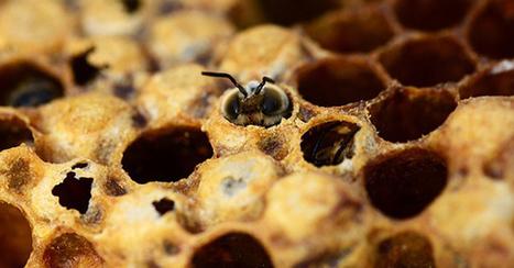 Abeilles : le géant des pesticides Bayer porte plainte contre l'Europe | Développement durable en France | Scoop.it