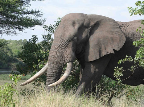 Ten things not to do in the Kruger Park | Kruger & African Wildlife | Scoop.it