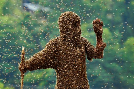 L'homme-abeille | Epic pics | Scoop.it