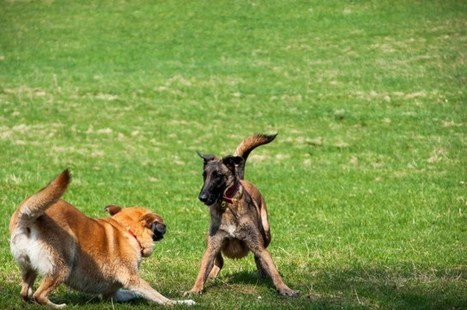 Do Dogs Feel Empathy? | Empathy and Animals | Scoop.it