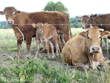 Agriculture - De l'importance de la filière viande en Nouvelle-Aquitaine | Agriculture en Dordogne | Scoop.it