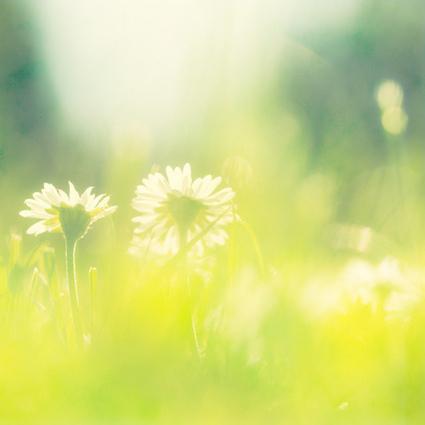 [美攝影] 矇矓綠韻中綻放光芒,春暖花開的清新感受   Visual Inspiration   Scoop.it