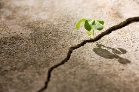 Want to Change the World? Be Resilient. | Student Council and Leadership | Scoop.it