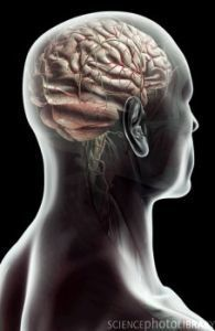 » Specific Brain Region Tied to Empathy - Psych Central News | Mom Ed | Scoop.it