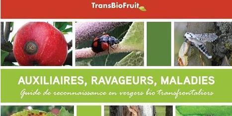 La coopération transfrontalière porte ses fruits | Arboriculture: quoi de neuf? | Scoop.it