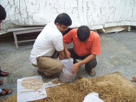 Assam, India: Blind farmers trained in mushroom