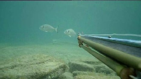 Marseille : nouvelle réglementation de pêche dans les calanques | Odyssea : Escales patrimoine phare de la Méditerranée | Scoop.it