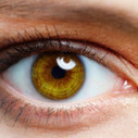 Lab-Grown Retina from Stem Cells Responds to Light | Teacher Tools and Tips | Scoop.it