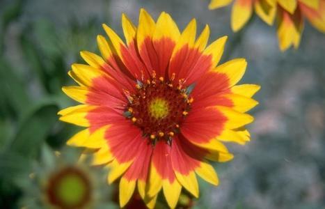 Gardening Questions? Ask a  Master Gardener   Organic Farming   Scoop.it