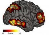 The seat of meta-consciousness in the brain   Theories of Existence   Scoop.it
