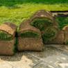 Dependable Lawn Service