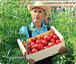 Monsanto's new herbicide-resistant GM crops threaten American vegetable farmers   Plant Based Nutrition   Scoop.it