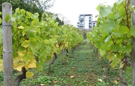 Et si l'Île-de-France redevenait une terre de vins? | Wine and the City - www.wineandthecity.fr | Scoop.it