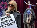 Celebs celebrate the closure of Ringling Bros. circus after 146 years | The Key is Veganism | Scoop.it