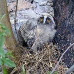 Περιβαλλοντικές ευαισθησίες από το 1ο Δημοτικό Σχολείο Πλατύκαμπου Λάρισας | School News - Σχολικά Νέα | Scoop.it