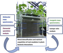 Elucidating rhizosphere processes by mass spectrometry – A review | Plant-Microbe Symbiosis | Scoop.it