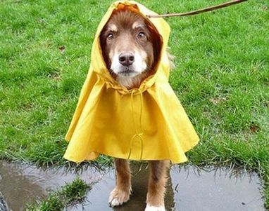 Top Tips To Keep Pets Safe During Hurricane Sandy - The Daily Treat: Animal Planet | Ask The Cat Doctor | Scoop.it