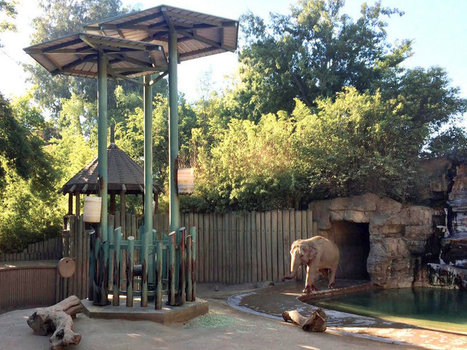 Fitness Trackers Aim To Improve The Health And Happiness Of Zoo Elephants | Pachyderm Magazine | Scoop.it