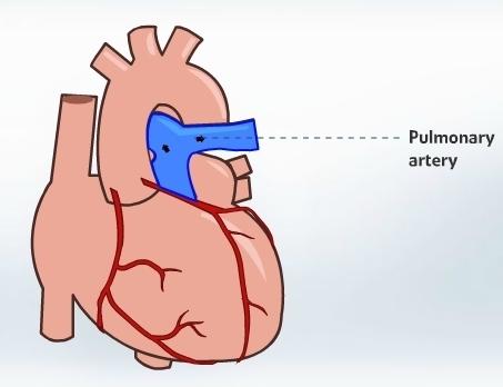 Interactive animated human heart edusomnia interactive animated human heart ccuart Images