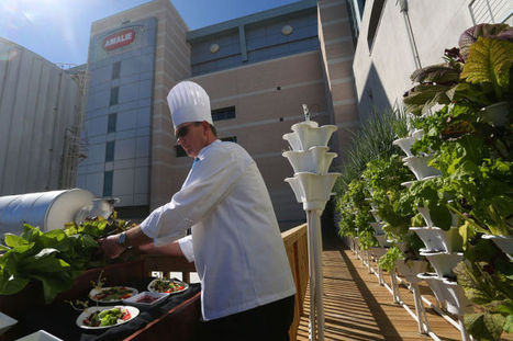 Organic garden at Amalie Arena feeds Lightning players, fans   edible landscaping   Scoop.it