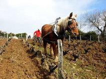 Travail du sol à cheval au domaine Boutet Saulnier à Vouvray | Tourisme du vin | Scoop.it