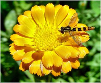 Ambiente: premiati i migliori progetti Life+ 2011 | Agevolazioni, Investimenti, Sviluppo | Scoop.it