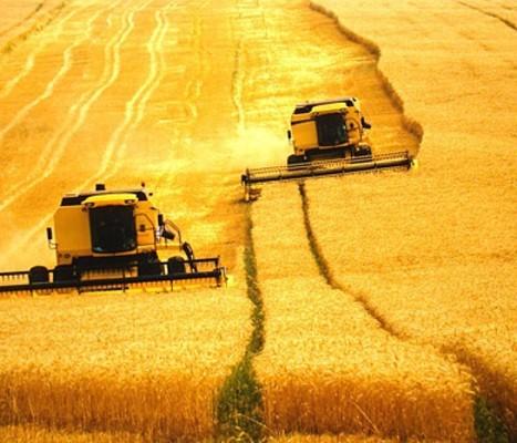 Agricultura: a maior invenção da humanidade | Geoflorestas | Scoop.it