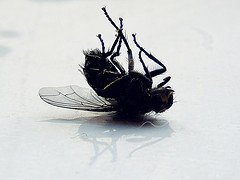 7 Ways To Make Sure Your Blog (And Mine) Is Not Gathering Dead Flies | Blogs, Blogging and Bloggers. | Scoop.it